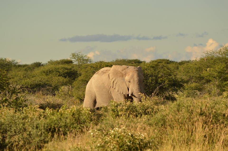 Renting A Car In Namibia For Safari